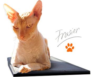 Frasier Rejuvent Cat Guru