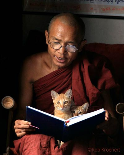reading-w-cats