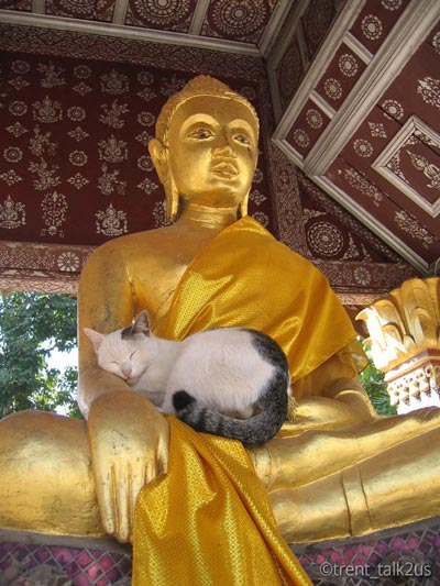zen-and-cat